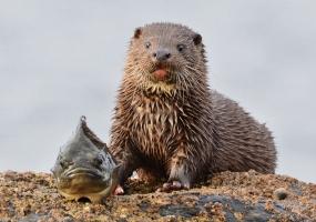 Otter 2 JW