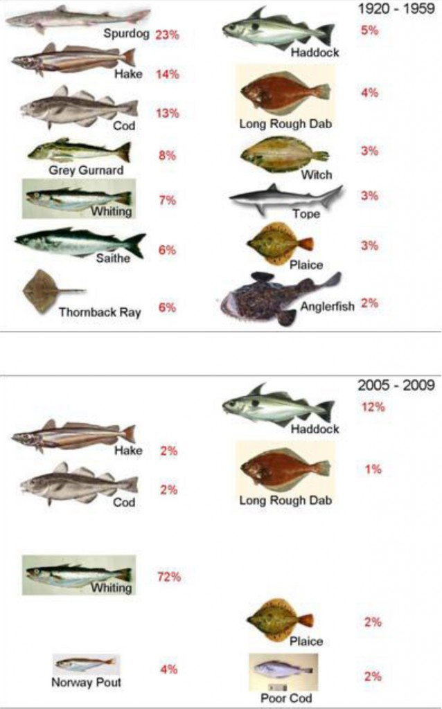 Pictorial representation of the change in the species mix making up 95% of the demersal fish biomass between 1920-1959 and 2005-2009 in the Clyde Sea ('Clyde Ecosystem Review' by F McIntyre, P G Fernandes and Dr Bill Turrell)